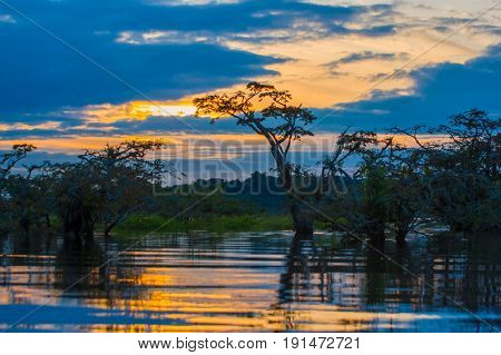 Sunset silhouetting a flooded jungle in Laguna Grande, in the Cuyabeno Wildlife Reserve, Amazon Basin, Ecuador.