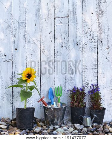 Vertical still life with summer flowers, sunflower and garden tools against white planks with copy space. Vintage planting flowers concept