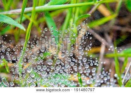 web with drops of dew and a spider on it