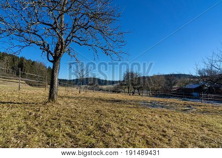 Wintertime in the Black Forest. A bare tree on a horse paddock.