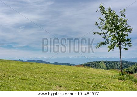 French countryside - Vosges. A tree in foreground and view of the alps in the background.