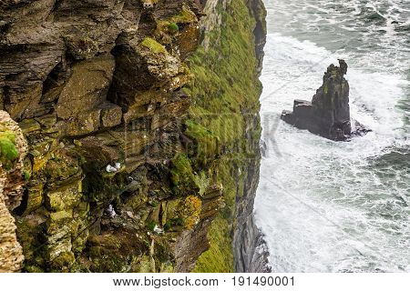 Detail photo of Cliffs of Moher in Ireland