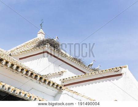 Storks on their nests at a rooftop of a white building in Castilblanco de los Arroyos, Spain