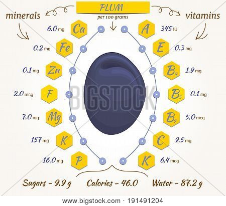 Plum infographics nutrition facts calories and analysis. The content of minerals and vitamins in plum. Vector illustration.