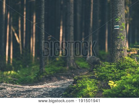 Deep Forest Trailhead. Hiking Scenic Forest Landscape.