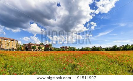 Wide angle view of a poppy field under dramatic sky in spring.