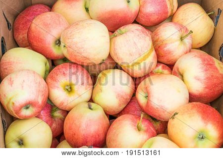 Freshly harvested gala apples showing damage from a late spring frost