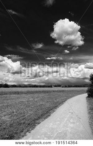 Springtime landscape in the park of Grugnotorto between Milan and Monza (Brianza Lombardy Italy). Black and white