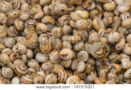 A gouping of snails located in a market in Cadiz Spain