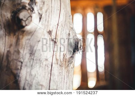 The trunk of the Great old tree without bark