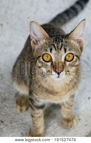 Young cat looks up at a camera.