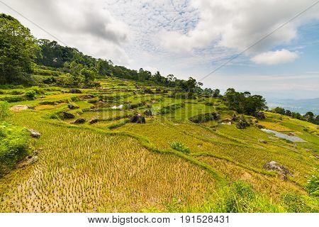 Stunning Landscape Of Rice Fields On The Mountains Of Batutumonga, Tana Toraja, South Sulawesi, Indo