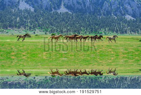 herd of horses galloping & galloping horses