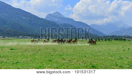 horses in the highlands and living area