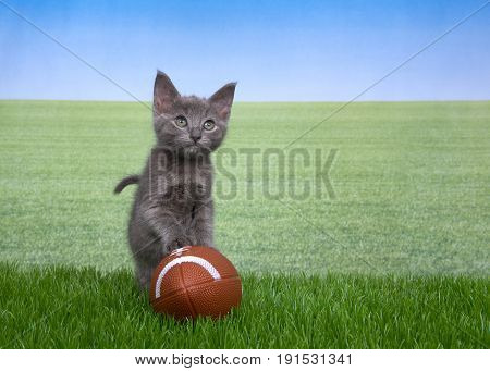 Gray kitten standing with paws on small american football in green grass field in background to skyline. Fun sports theme with animals