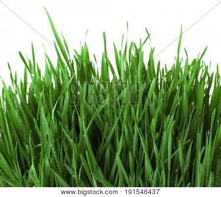 Fresh green grass on white background