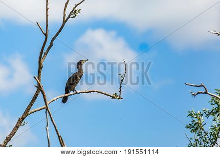 Photo of great cormorant standing on tree branch