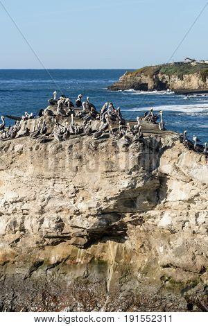 Herd Of Birds On Natural Brides Rock