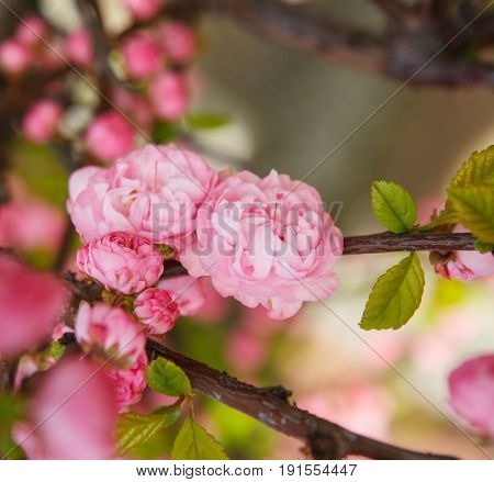 Spring border abstract blured background art with pink sakura or cherry blossom. Beautiful nature scene with blooming tree and sun flare. Easter Sunny day. Springtime.