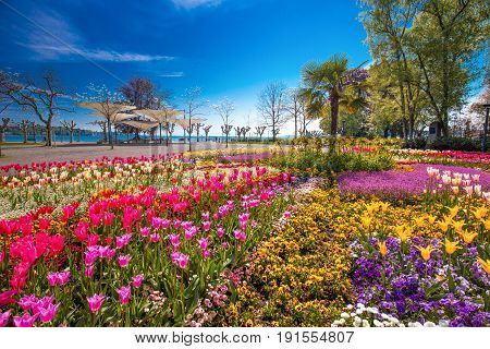 Flowers (tulips Palms) in the centre of Konstanz city park with Constance lake (Bodensee) in the background. Konstanz is a university city located at the western end of Lake Constance in the south-west corner of Germany Switzerland
