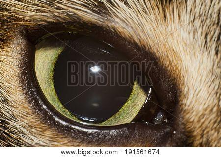 shot of eye of cat extreme closeup