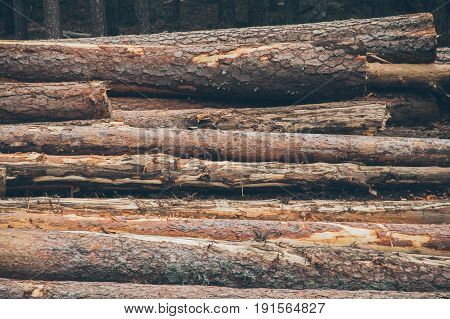 Pine logs background. Timber industry. Tree trunks texture and background for designers. Close up view of cut tree trunks in the forest. Wood pile texture.