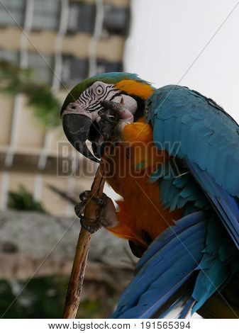 Colorful parrot grasping branch, side view Side view of a colorful parrot holds a tree branch