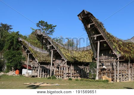 Houses in Toraja Sulawesi Indonesia with boat-shaped roofs.