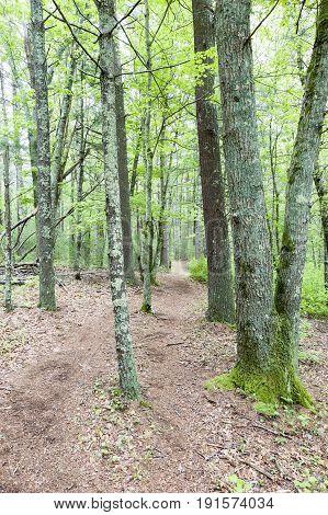 Trail through Shoolman Preserve in Rochester Massachusetts