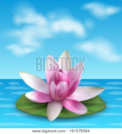 Water Lily, Nenuphar, Spatter-dock, Pink Lotus on Green Leaf. Flower Exotic - Illustration Vector