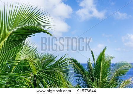 Tropical scene palm trees and fronds swaying in breeze over ocean with fronds breaking distant horizon and below sky.