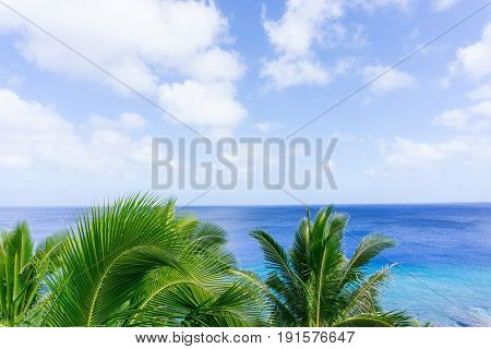 Tropical scene palm trees and fronds swaying in breeze over ocean distant horizon and below sky.