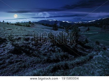 carpathian mountain ridge with snowy peaks. Grassy alpine meadow with spruce forest in spring season. Fine weather with blue sky and some clouds at night in full moon light