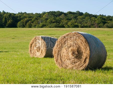 Harvesting of hay - hay bales on the summer meadow