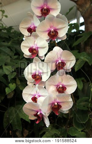 Beautiful image of gorgeous exotic orchids in tropical garden