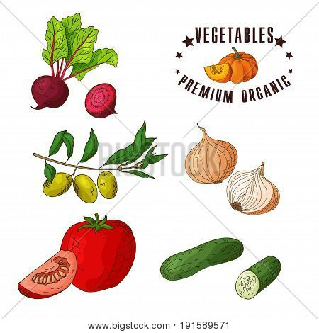 Hand drawn vegetarian illustration. Isotaled elements beet, olive, tomato, cucumber. Vector sketch for card or poster