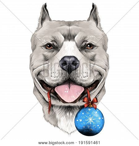 dog breeds the American pit bull Terrier white color head on new year's eve ball in the teeth sketch vector graphics color picture
