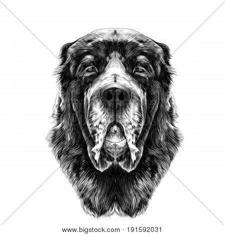 the head of the dog breed Alabai or the Central Asian shepherd dog full face symmetry sketch vector graphics black and white drawing