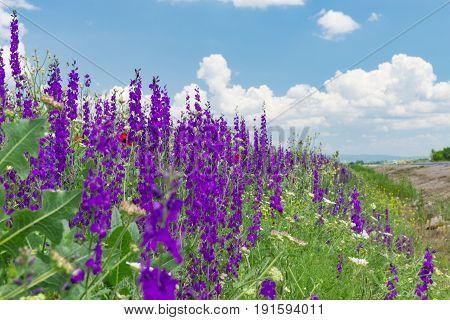 beautiful purple flowers in the fields & spring flowers