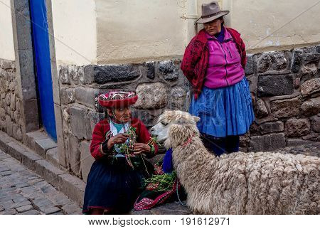 Pisac, Peru- March 16, 2017:Old Women in traditional dress feeding Alpaca in Pisac Peru