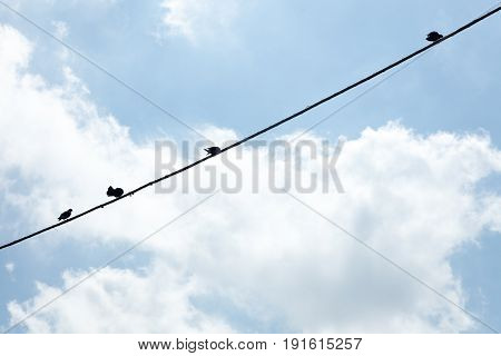Birds hanging on a wire in Campania Italy