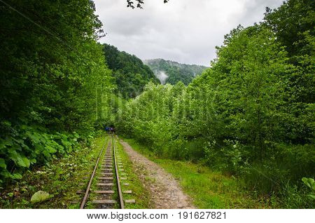 Summer mountain forest with foliar trees in Gaucasus, Mezmay, Krasnodar, Russia