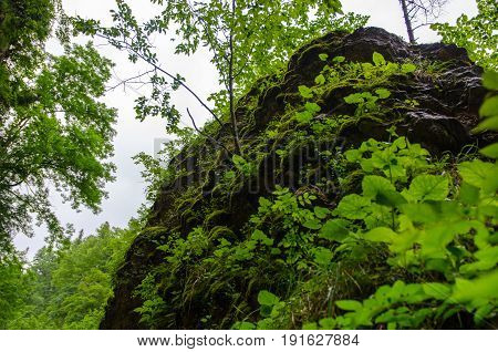 Huge stone rock overgrown with plants in summer mountain forest with foliar trees in Gaucasus, Mezmay, Krasnodar, Russia