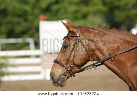 Side view head shot of a beautiful show jumper horse in action