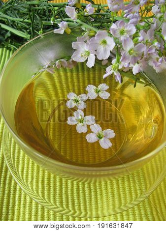 Cup of herbal tea with cuckoo flower