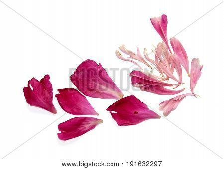 Pink Peon Petals Scattered On The Table