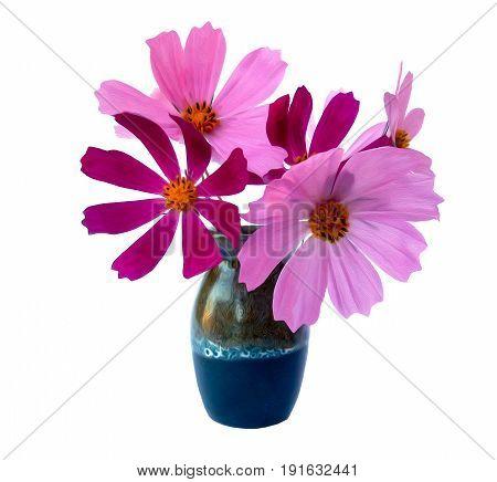 Kosmeya Fresh Pink Flower, Photo Manipulation