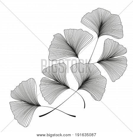 Vector illustration of ginkgo biloba leaves. Background with silhouette of leaves