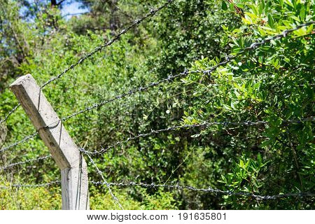 Barbed wire on a background of plants and sky. Leaves behind barbed wire