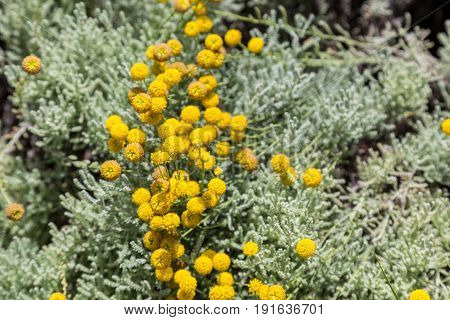 Small Yellow Flowers In Sunny Summer Day